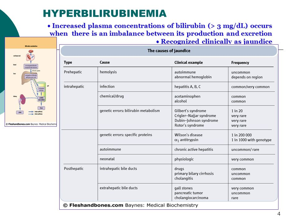 HYPERBILIRUBINEMIA Increased plasma concentrations of bilirubin (> 3 mg/dL) occurs. when there is an imbalance between its production and excretion.