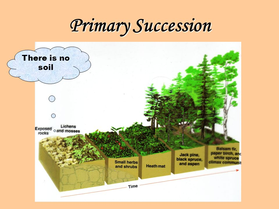Primary Succession There is no soil