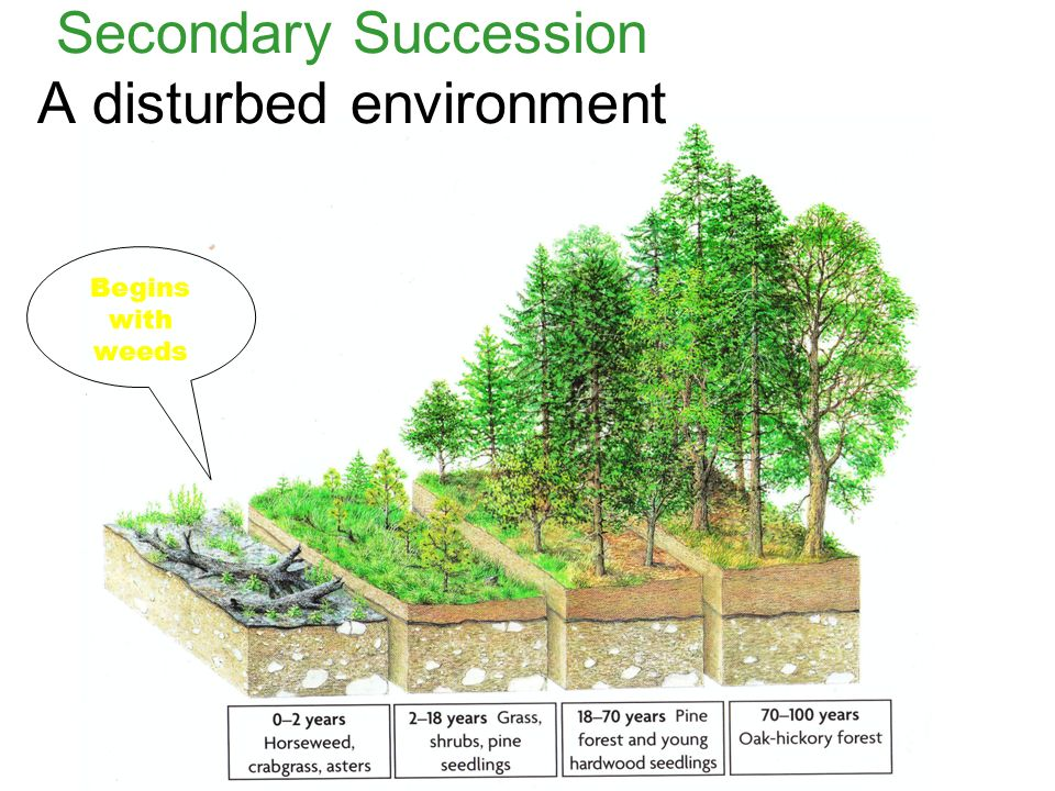 Secondary Succession A disturbed environment