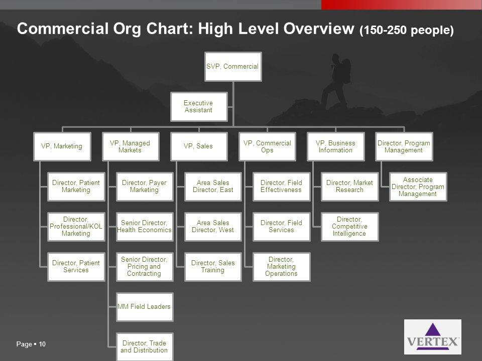 Commercial Org Chart: High Level Overview (150-250 people)