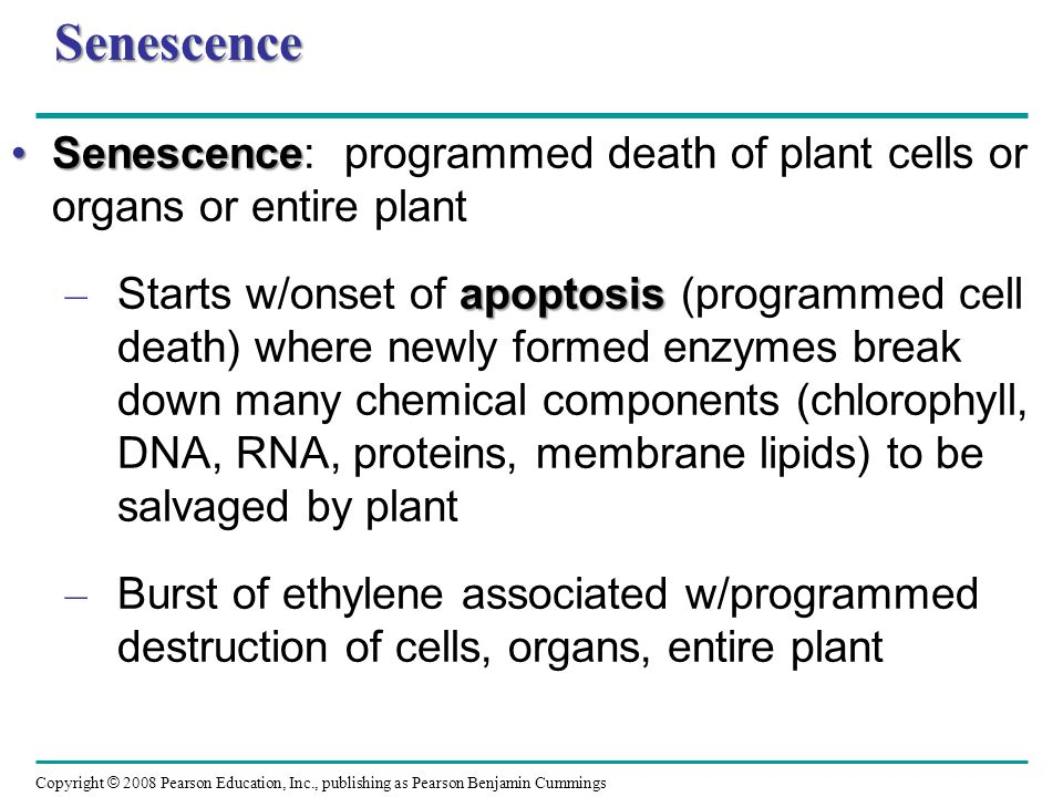 Senescence Senescence: programmed death of plant cells or organs or entire plant.