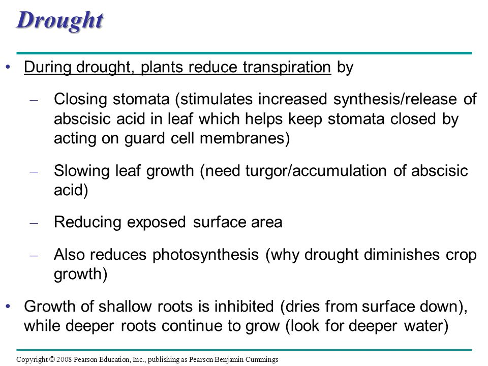 Drought During drought, plants reduce transpiration by