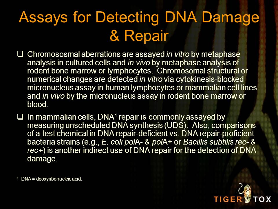 Assays for Detecting DNA Damage & Repair