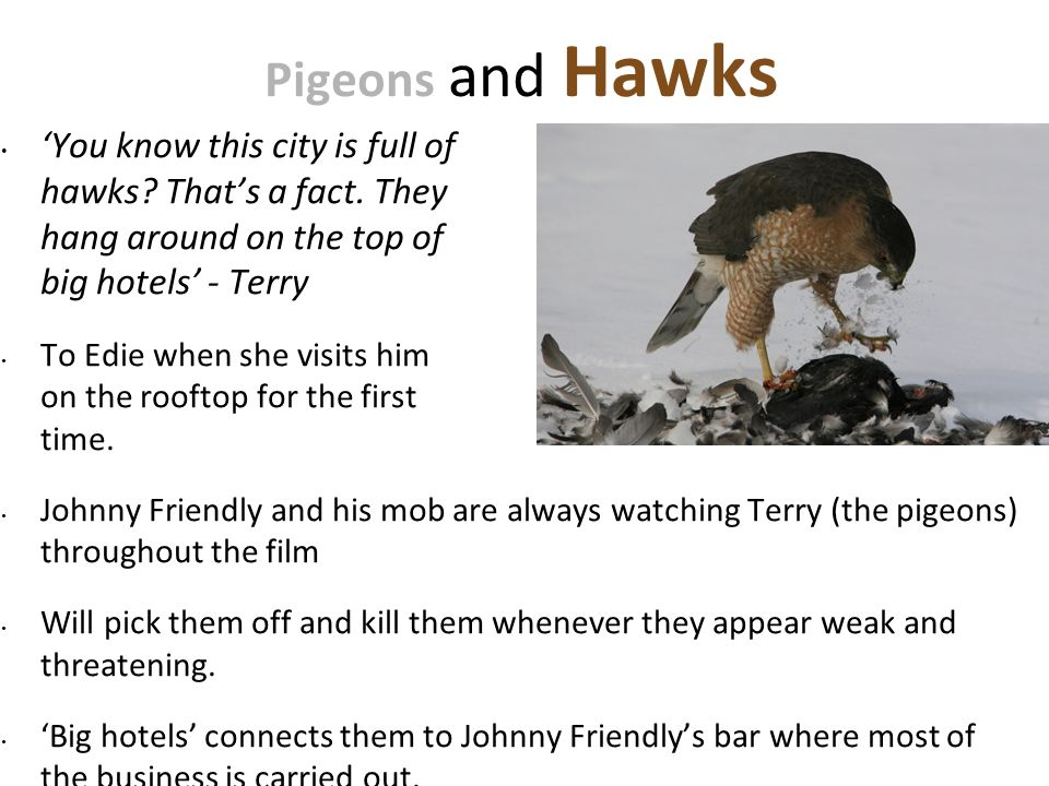 :54. Pigeons and Hawks. 'You know this city is full of hawks That's a fact. They hang around on the top of big hotels' - Terry.