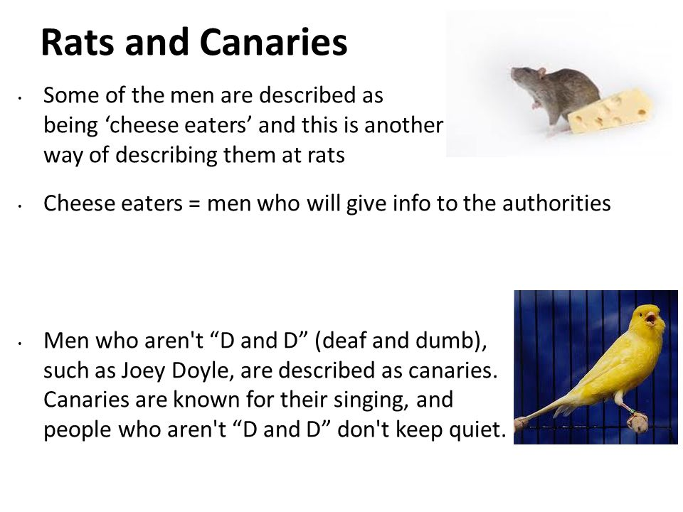 Rats and Canaries Some of the men are described as being 'cheese eaters' and this is another way of describing them at rats.