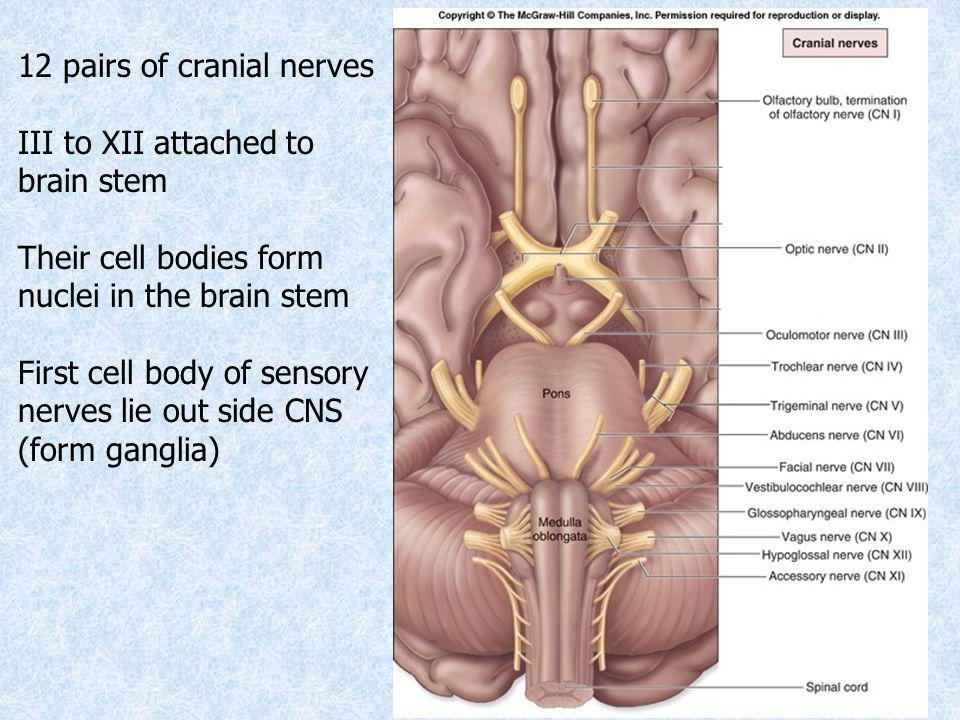 Cranial Nerves Sanjaya Adikari Department of Anatomy. - ppt video ...