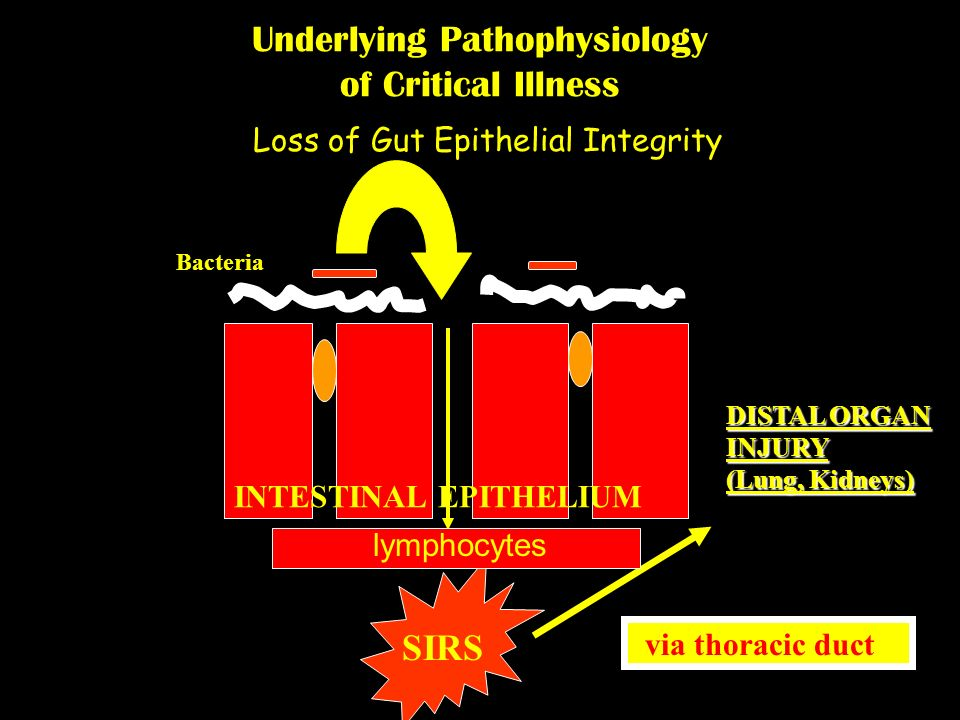 Loss of Gut Epithelial Integrity