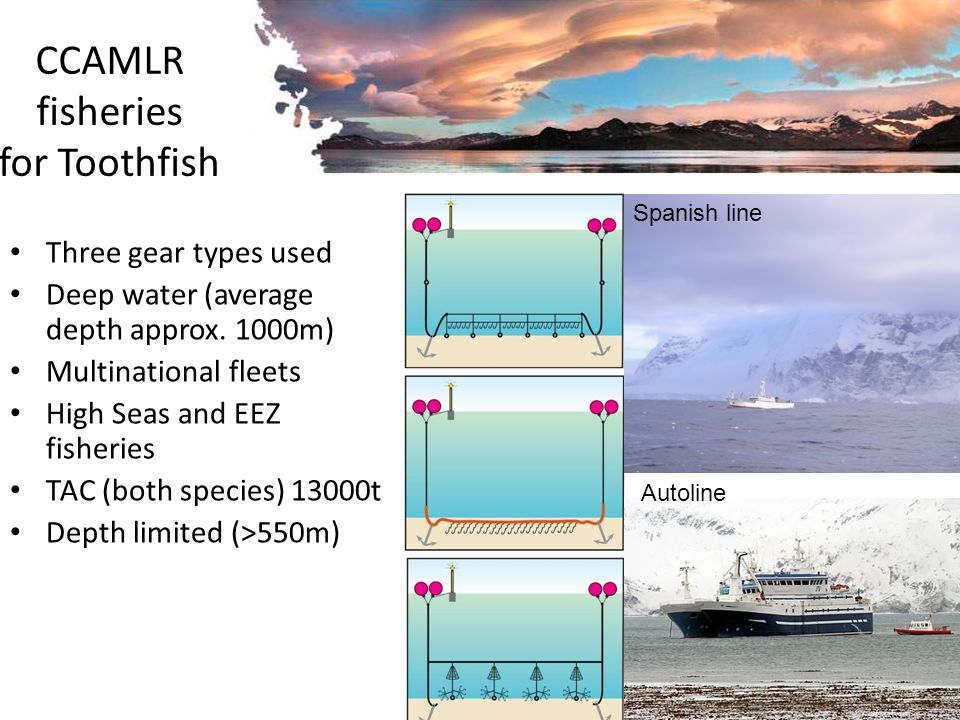 CCAMLR fisheries for Toothfish