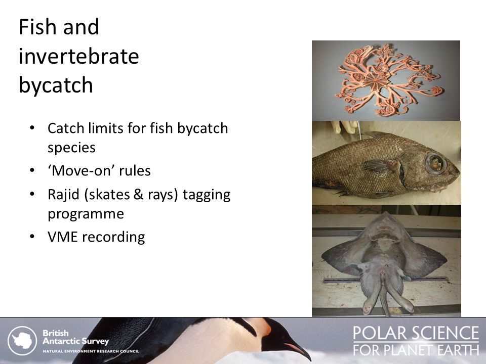 Fish and invertebrate bycatch
