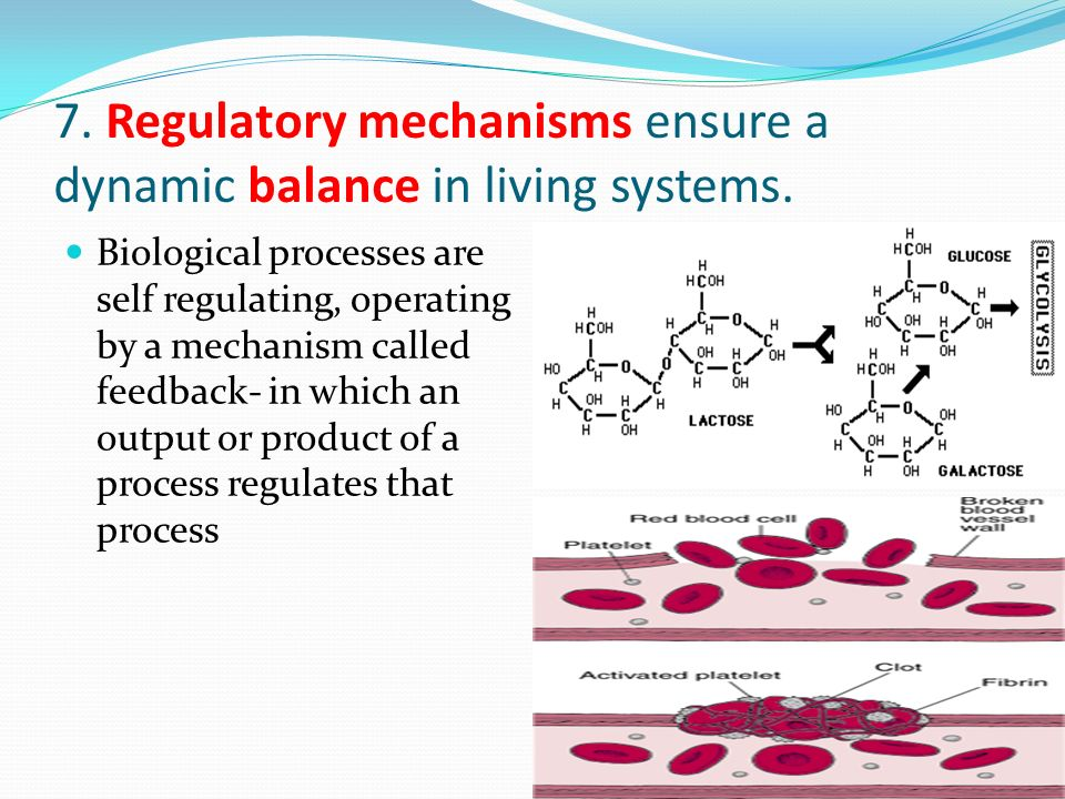 7. Regulatory mechanisms ensure a dynamic balance in living systems.