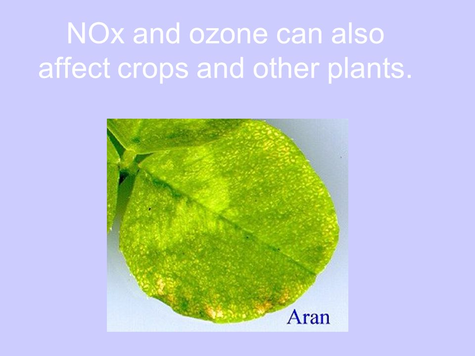 NOx and ozone can also affect crops and other plants.