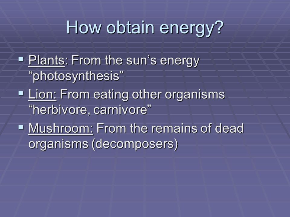 How obtain energy Plants: From the sun's energy photosynthesis