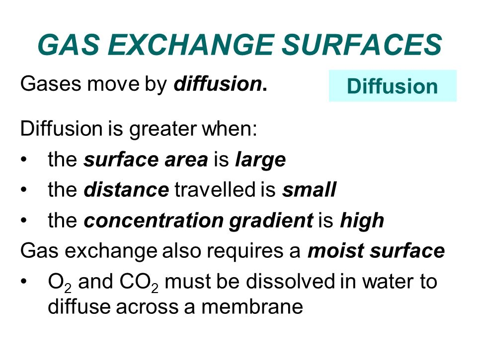 GAS EXCHANGE SURFACES Gases move by diffusion. Diffusion