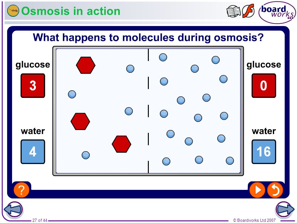 Osmosis in action Boardworks GCSE Additional Science: Biology