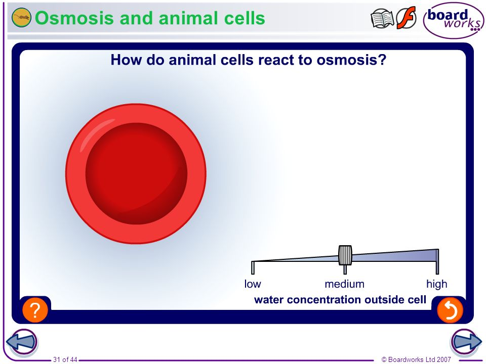 Osmosis and animal cells