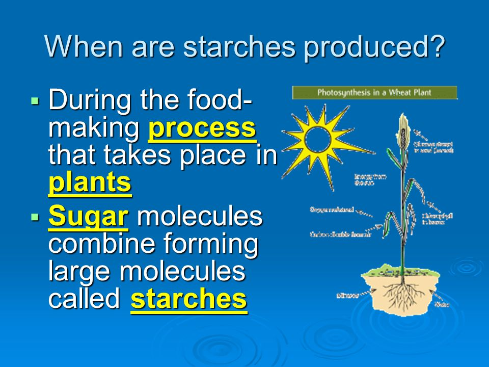When are starches produced