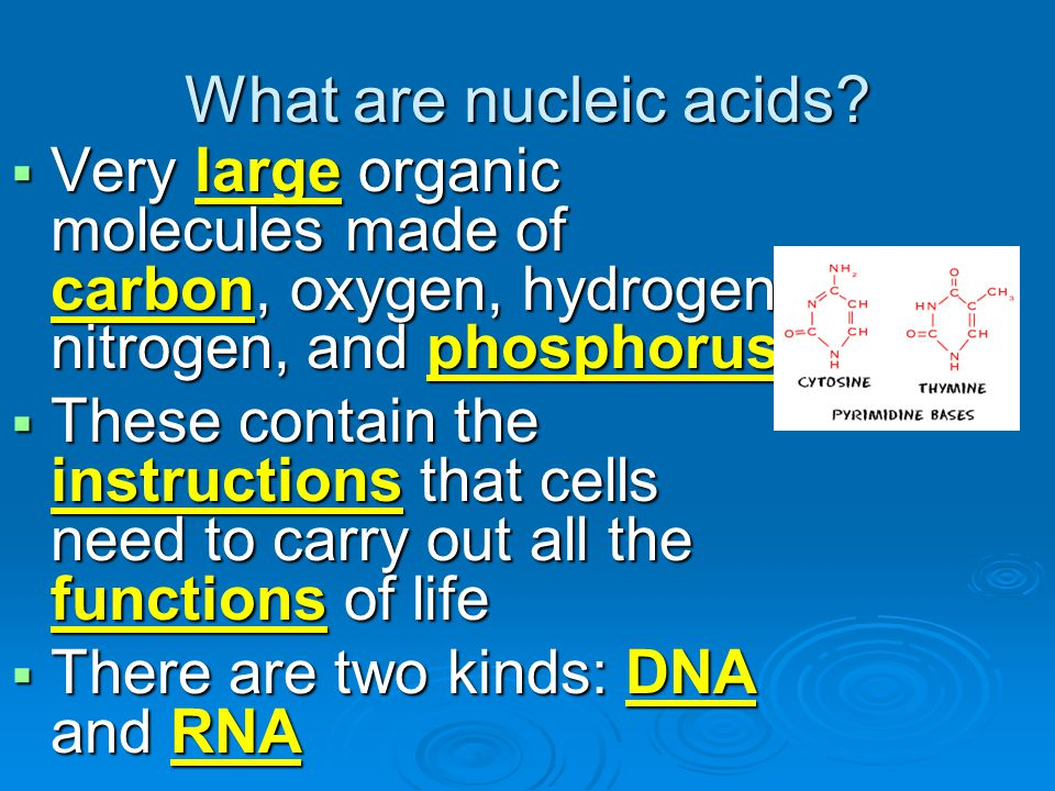 What are nucleic acids Very large organic molecules made of carbon, oxygen, hydrogen, nitrogen, and phosphorus.