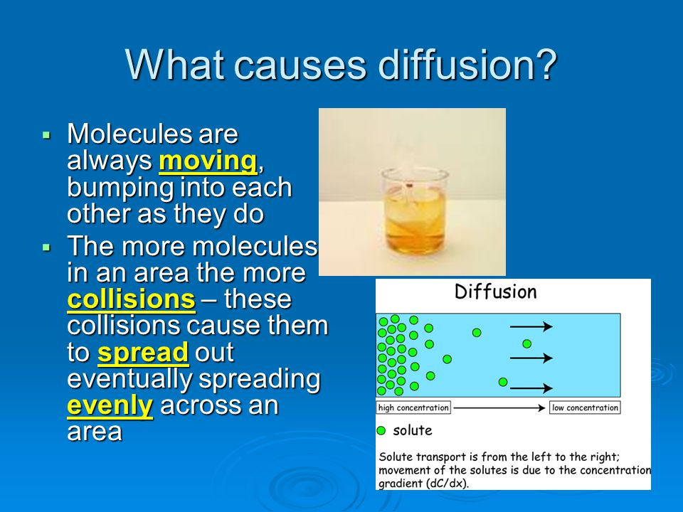 What causes diffusion Molecules are always moving, bumping into each other as they do.