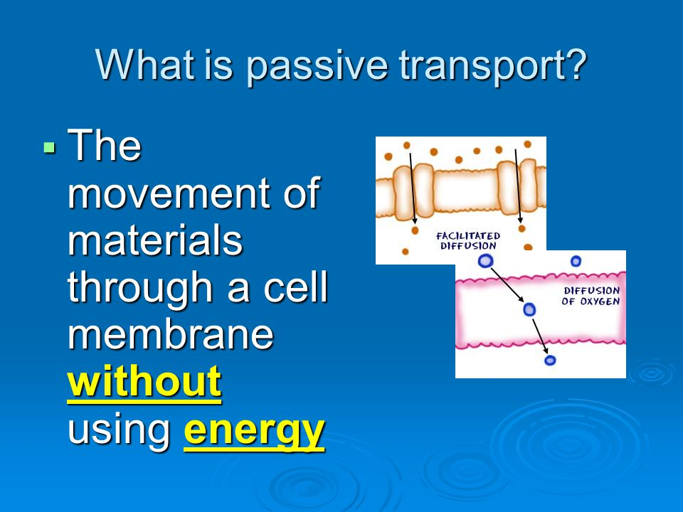 What is passive transport