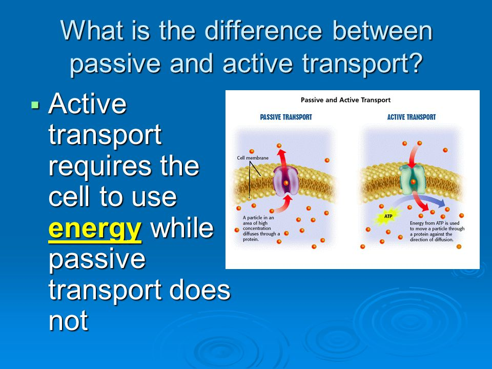 What is the difference between passive and active transport