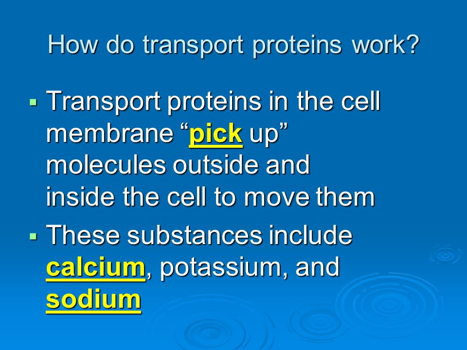 How do transport proteins work