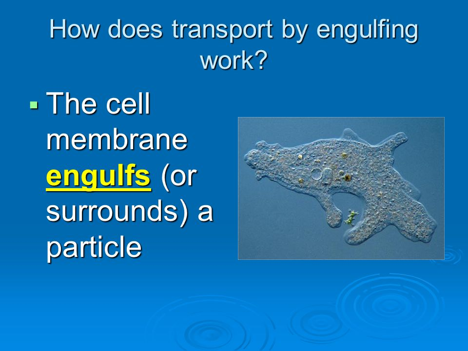 How does transport by engulfing work