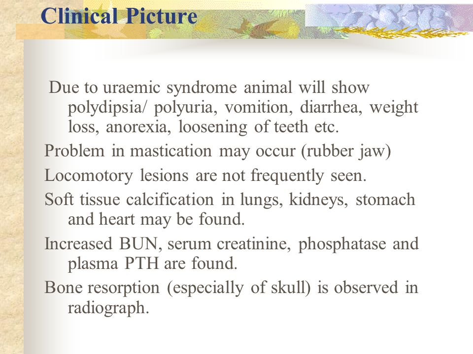 Clinical Picture Due to uraemic syndrome animal will show polydipsia/ polyuria, vomition, diarrhea, weight loss, anorexia, loosening of teeth etc.