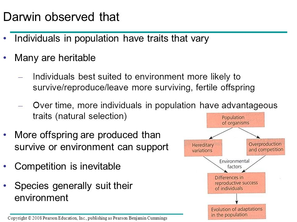 Darwin observed that Individuals in population have traits that vary