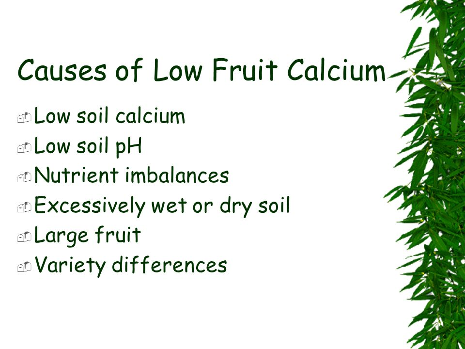Causes of Low Fruit Calcium