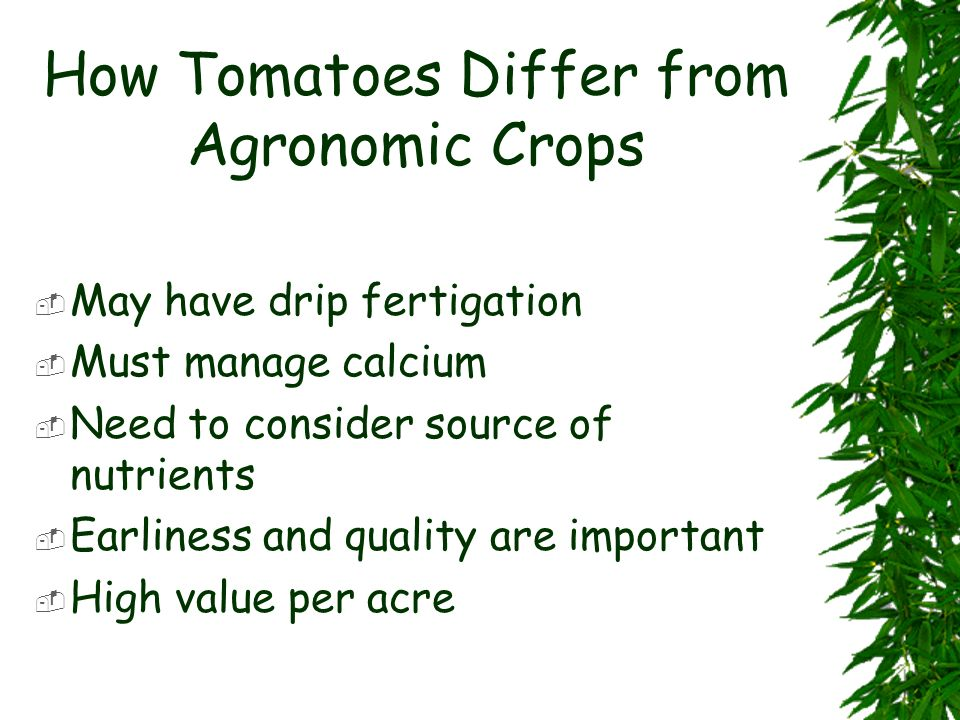 How Tomatoes Differ from Agronomic Crops