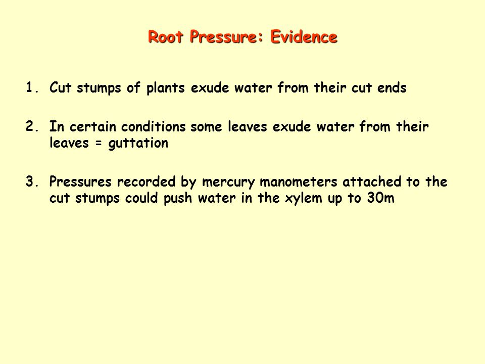 Root Pressure: Evidence