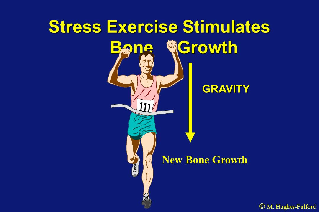 Stress Exercise Stimulates Bone Growth