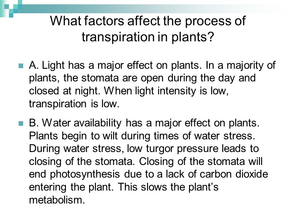 What factors affect the process of transpiration in plants