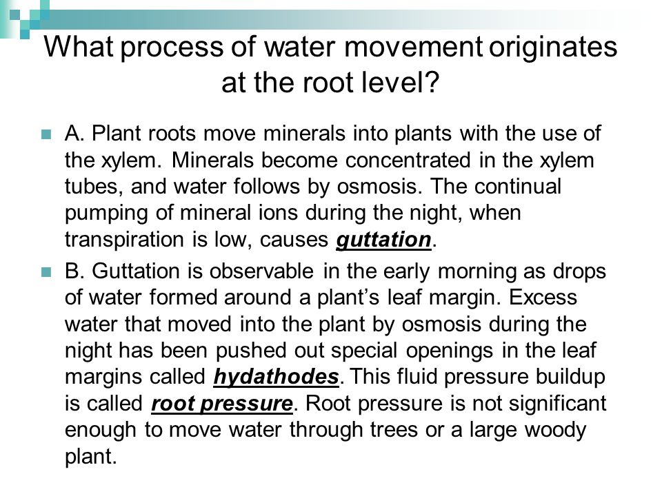 What process of water movement originates at the root level