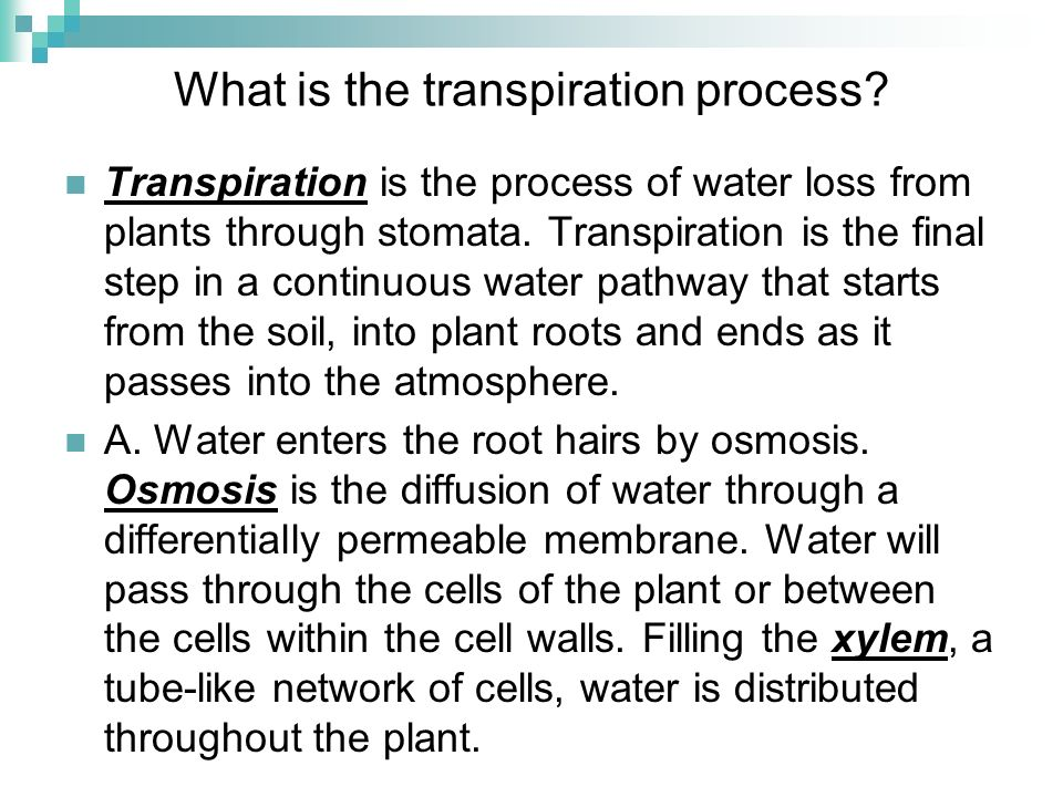 What is the transpiration process