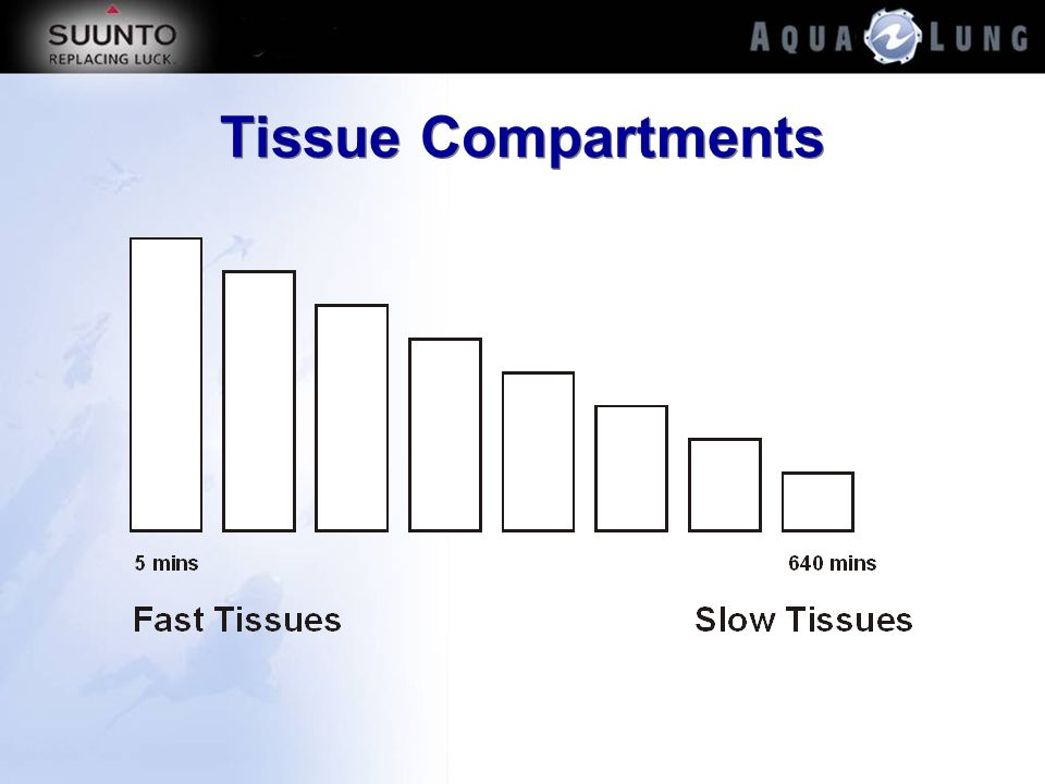 Tissue Compartments