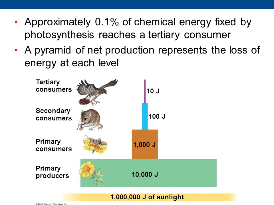 Approximately 0.1% of chemical energy fixed by photosynthesis reaches a tertiary consumer