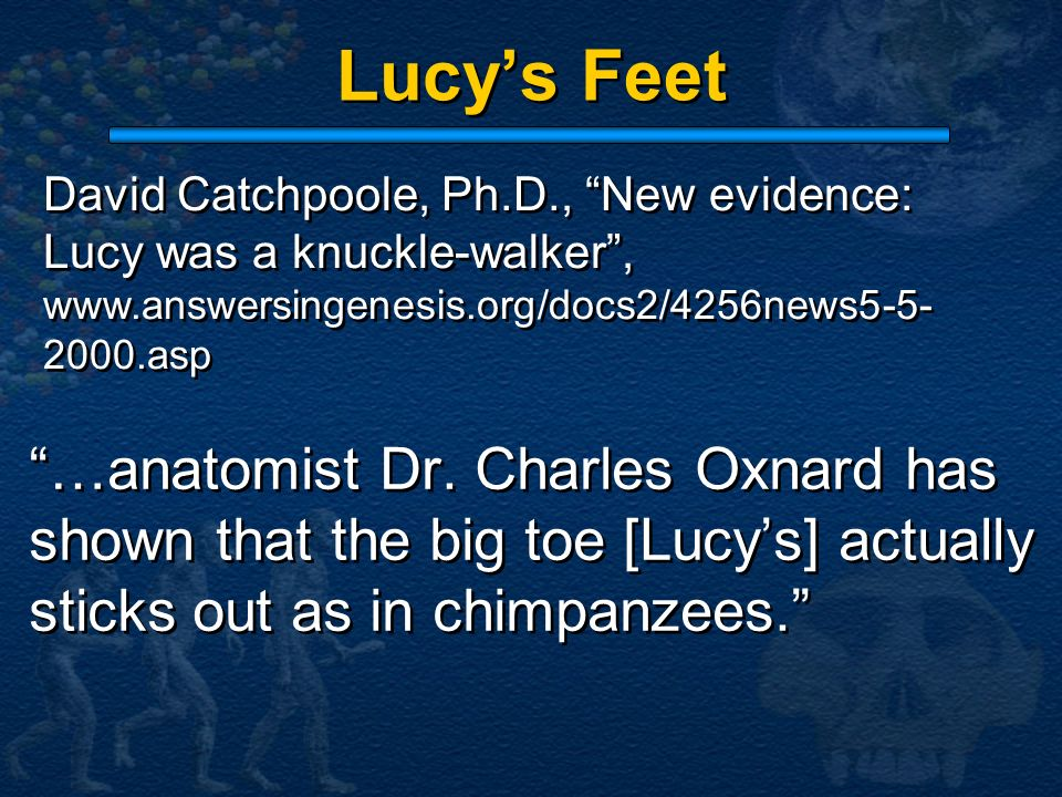 Lucy's Feet David Catchpoole, Ph.D., New evidence: Lucy was a knuckle-walker ,