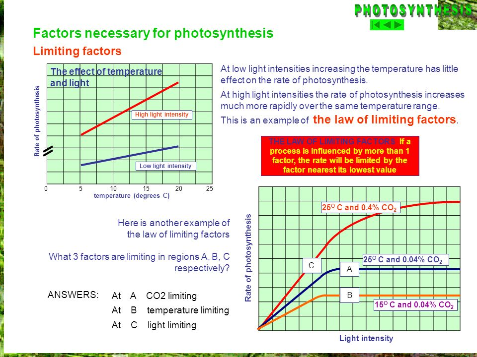 temperature (degrees C) Rate of photosynthesis