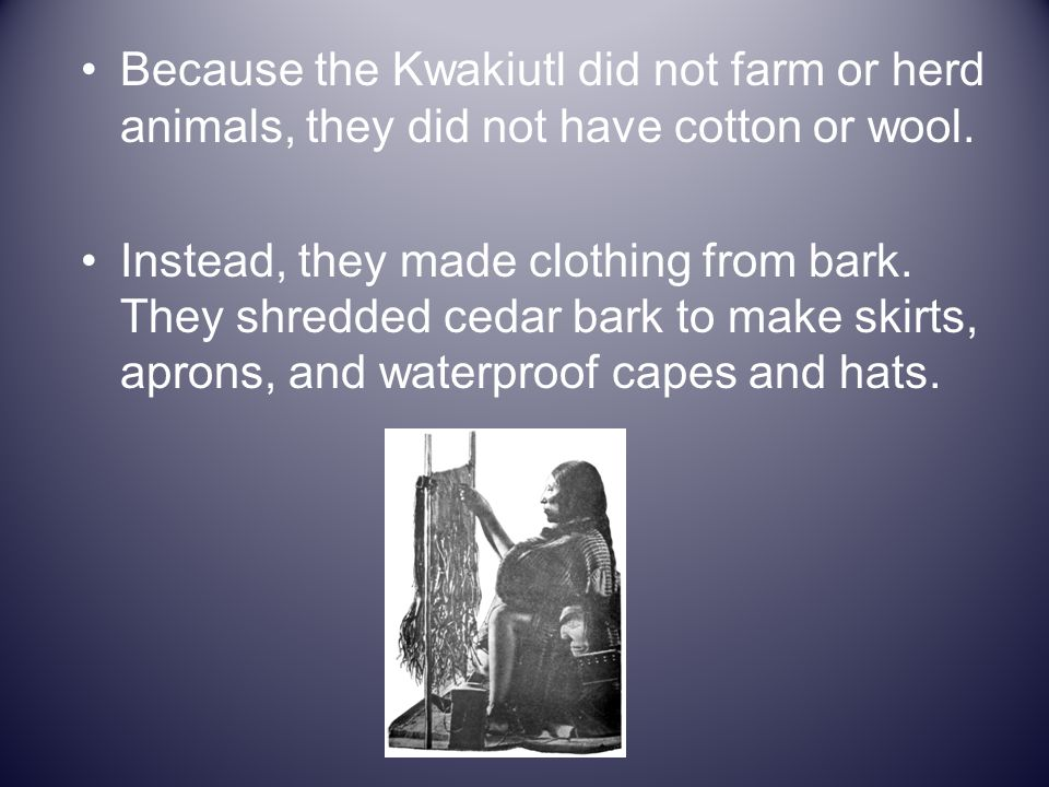 Because the Kwakiutl did not farm or herd animals, they did not have cotton or wool.