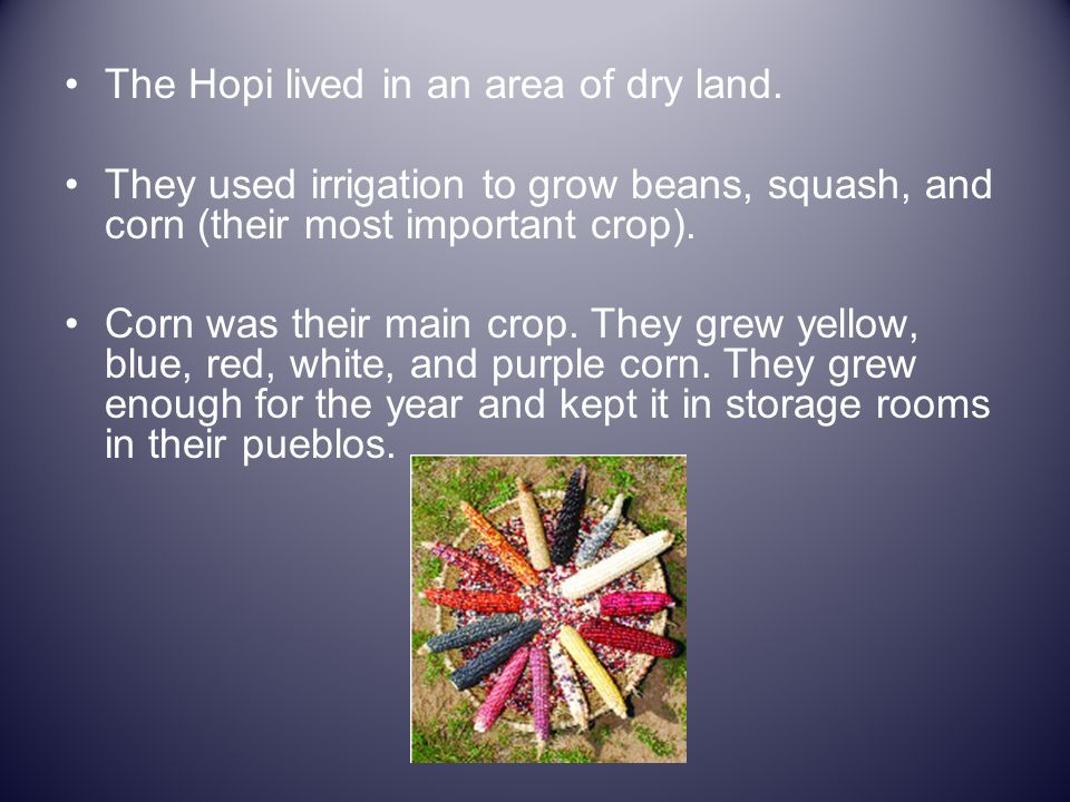 The Hopi lived in an area of dry land.