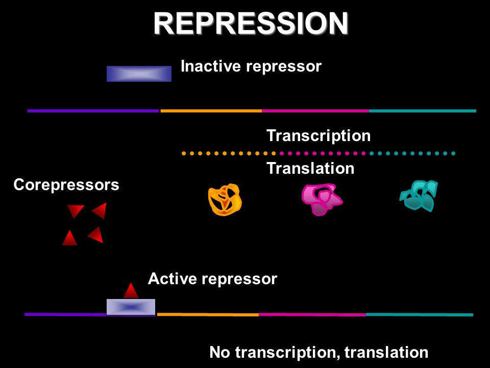 REPRESSION Inactive repressor Transcription Translation Corepressors