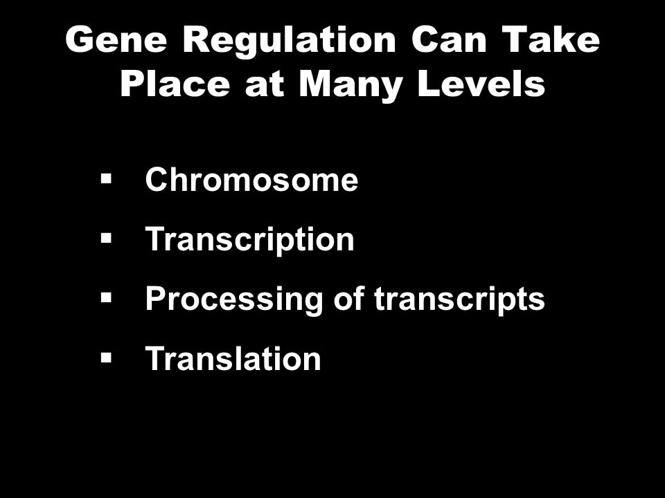 Gene Regulation Can Take Place at Many Levels