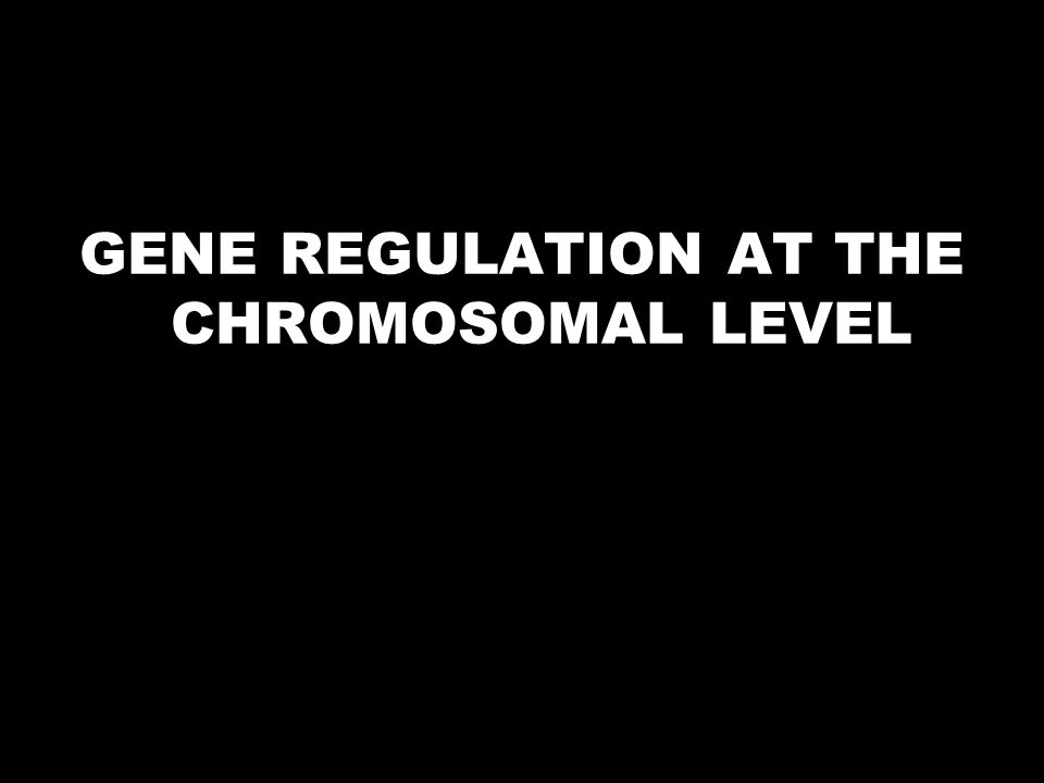 GENE REGULATION AT THE CHROMOSOMAL LEVEL