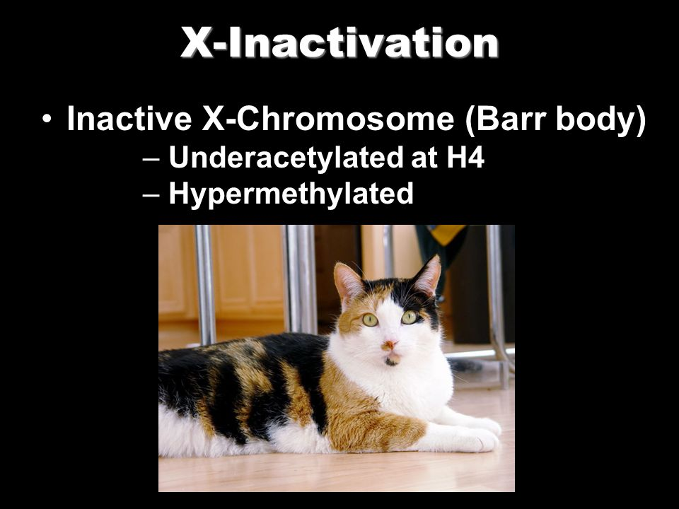 X-Inactivation Inactive X-Chromosome (Barr body) Underacetylated at H4