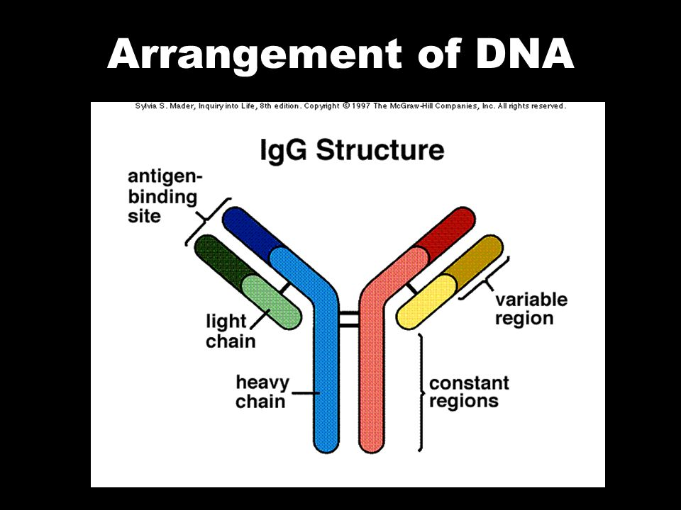 Arrangement of DNA