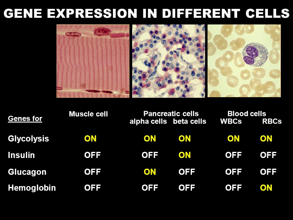 GENE EXPRESSION IN DIFFERENT CELLS