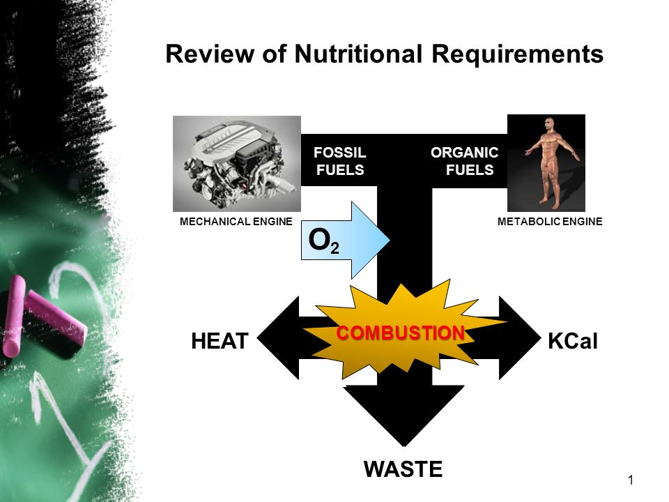 Review of Nutritional Requirements