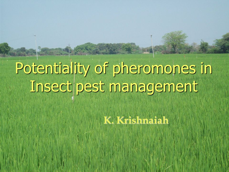 Potentiality of pheromones in Insect pest management