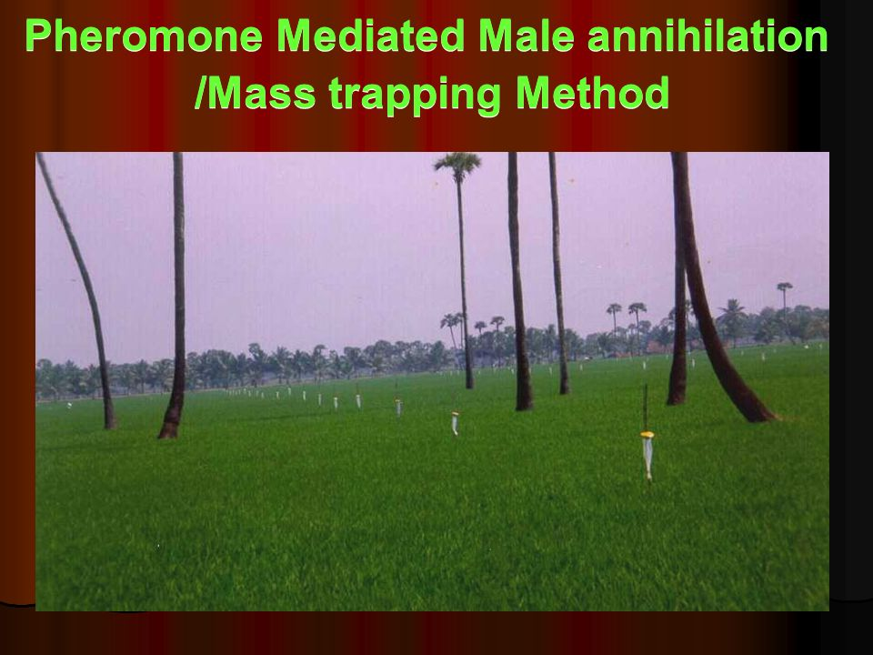 Pheromone Mediated Male annihilation